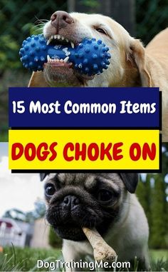 Learn the most common items dogs choke on. Be proactive and keep these items out of your pup's reach. Some of these items may surprise you! Check out the full list in our article!