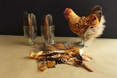 Forever in fabric — Pet Chicken Ranch Chicken And Cow, Ranch Chicken, Buff Orpington, Winged Girl, Oyster Crackers, Pet Chickens, Little Brown, Nesting Boxes, Soft And Gentle