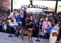 Dog Days of Summer: 2012 Major League Baseball Dog-Friendly Events  #dog #mlb #barkinthepark