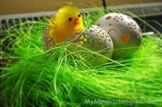 Little chicken on eggs shell