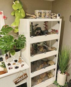 Gecko Habitat, Reptile Habitat, Reptile Room, Reptile Cage, Reptile Tanks, Gecko Terrarium, Reptile Terrarium, Terrariums, Reptiles And Amphibians