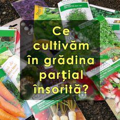 Garden Pool, Growing Herbs, Ikebana, Vegetable Garden, Diy And Crafts, Gardening, Flowers, Tudor, Permaculture