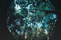 Trees, Lomography, Fisheye, lomo, analog, Laryssa Lacerda