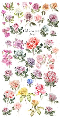 Distinctive Gifts Mean Long Lasting Recollections Hand Drawn Watercolor Roses Bundle , Watercolor Flowers, Watercolor Paintings, Watercolor Rose Tattoos, Watercolour, Vintage Flower Tattoo, Drawing Hands, Floral Drawing, Rose Petals Drawing, Rose Drawings