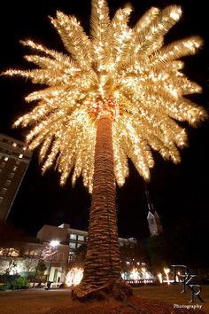 Palm Tree decorated with Christmas Lights Holiday Marion Square Charleston South Carolina | Dustin K Ryan Photography