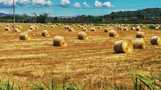 Parco della Maremma  # tuscany #maremma #italy #nature #green #beautifull