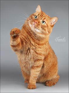 Orange kitties are special!