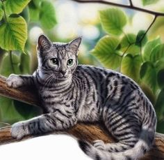 Gorgeous artwork by Franck Neidhardt. #cats #art #cute