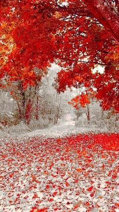 First snowfall, somewhere in Minnesota. First snowfall, somewhere in Minnesota. First snowfall, somewhere in Minnesota. Wallpaper Winter, Landscape Photography, Nature Photography, Photography Tips, Nature Architecture, Winter Szenen, Nature Landscape, Autumn Scenery, All Nature