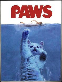 paws parody of jaws Funny Bunnies, Cute Cats, Crazy Cat Lady, Crazy Cats, Cat Paws, Dog Cat, Funny Animals, Cute Animals, Baby Animals