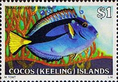 Cocos Keeling Islands 1979 Fishes SG 46 Palette Surgeonfish Fine Mint Scott 49  Other Cocos Keeling Island Stamps HERE