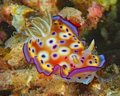 Beautiful Sea Creatures, Deep Sea Creatures, Animals Beautiful, Beneath The Sea, Under The Sea, Cute Lizard, Save Our Oceans, Sea Slug, Sea Dragon