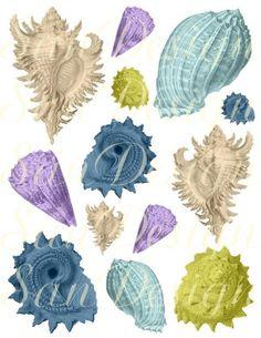 Sea Shells Digital Collage Sheet No. 430