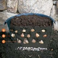 Grab a container and plant layers of bulbs that will give you three bursts of color when spring arrives. Choose bulb varieties that flower a few weeks apart, such as crocus, tulips, and daffodils, which will bloom in rotation for up to six weeks. To fill a container thats 12 inches in diameter and 12 to 14 inches deep, youll want about 9 crocus, 7 tulip, and 5 daffodil bulbs.