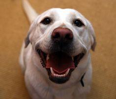 dog smile - Google Search