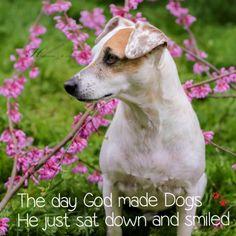 via Dogly app http://dogly.com/p/23319 @beingdogly #beingdogly