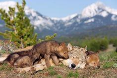 Mommy wake up!! I'm Huuungggry!!!