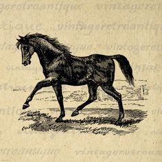 Antique Horse Image Printable Download Digital Graphic Illustration Vintage Clip Art Jpg Png Eps 18x18 HQ 300dpi No.2314 @ vintageretroantique.etsy.com