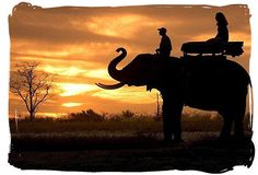 riding an elephant in the sunset. A once in a lifetime experience
