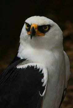 Resting bitch face. ~ETS #eagle