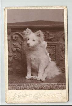 Cabinet Card of Dog Wareham's Enamel Portraits Freeport Illinois | eBay