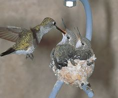hummingbird homes .. invite them to nest ```love this```
