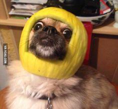 He is wearing a melon helmet.