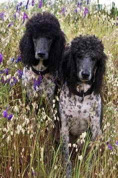 My Party Boys by Runs with Poodles, via Flickr