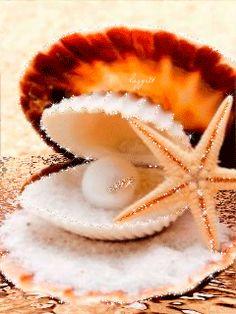 Seashells (GIF)