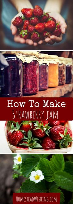 Strawberry Jam Recipe I love canning this jam, it is my favorite flavor! My strawberry jam recipe is pretty simple, and delicious! You cannot go wrong with strawberry jam! | http://homesteadwishing.com/strawberry-jam-recipe/ ‎ | http://homesteadwishing.com/strawberry-jam-recipe/ ‎ | Homestead WIshing, Author Kristi Wheeler |