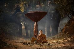 Elephant and Monk ,Surin Thailand by Saravut Whanset