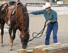 Bombproof Your Horse the Mounted Patrol Training Way with Horse Desensitization