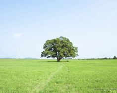 field with a tree - Google Search