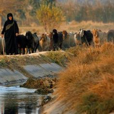 Iraqi women herding sheep in the south Iraqi Women, People Around The World, Around The Worlds, Half The Sky, Selena Gomez Style, Sumerian, Baghdad, Middle East, Old Photos