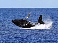 source: pacific whale foundation