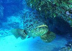 Grouper wiki dating websites