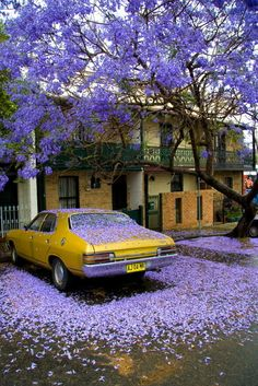 a clue in a mystery - a car's silhouette in dropped flower petals