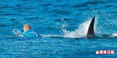 衝浪賽遇鯊襲 男猛踹逃生 | 蘋果日報