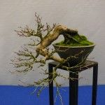 Noelanders_Trophy_2014_petit-arbre.com (6)