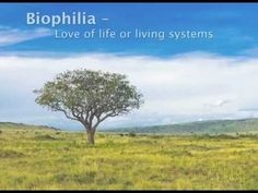 What is Biophilia and What Does It Have to Do with Sustainability Life Affirming, Natural Materials, Conservation, Sustainability, Models, Spaces, Watch, Garden, Garten