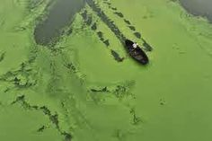 PURIFICACION DE AIRE AIRIFE te dice La eutrofización está causada por un incremento de nutrientes vegetales en el agua. El aumento en la disponibilidad de nutrientes hace que ciertas plantas acuáticas, tales como algas y lentejas de agua, crezcan tanto que bloqueen el aporte de luz solar al agua. Las plantas utilizan además todo el aporte de oxígeno disponible, que no será renovado, porque las plantas heterotróficas y las bacterias necesitan luz para realizar la fotosíntesis