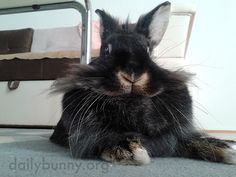 Bunny, you look so dignified! - September 23, 2016