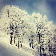 Chiisagata District - Cortina Resort, Hakuba Japan  which is the sweetest resort ever. its small and a bit of a pain to get to but so so worth it. it was like 35 buks a day for a lift ticket, onsen voucher and a $10 lunch pass. and the tree skiing there is incredible