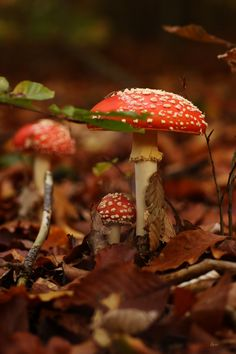 The Enchanted Garden Mushroom Pictures, Mushroom Images, Enchanted Wood, Mushroom Fungi, Autumn Aesthetic, Nature Pictures, Botany, Mother Nature, Flora