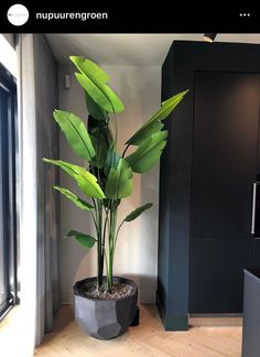 Discover recipes, home ideas, style inspiration and other ideas to try. Living Room Designs, Living Room Decor, Plantas Indoor, House Plants Decor, Interior Plants, Natural Home Decor, Artificial Plants, Houseplants, Indoor Plants