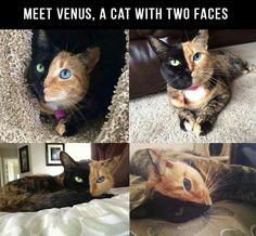 Cat with 2 faces.
