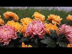 YouTube Music Web, Floral Wreath, Make It Yourself, Happy Birthday, Entertainment, Youtube, Happy Brithday, Floral Crown, Urari La Multi Ani