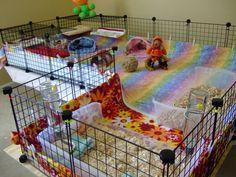 Home Sweet Home - Guinea Pig Cage Photos