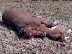 Enjoying the sunshine at Thornmar Farm: Bayonne, a half to Eightofastocatch, and her filly by Oxbow. #mdbred