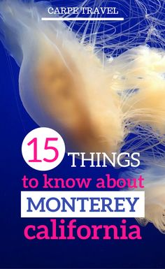 There's a lot of things to do in Monterey CA, but having a little background on the area brings more color and context to this little California beach town. Here are a few fun facts you can quiz your friends or kids on the next time you're visiting. California With Kids, Monterey California, California Beach, California Travel, Monterey Bay, Northern California, Central California, Travel With Kids, Family Travel